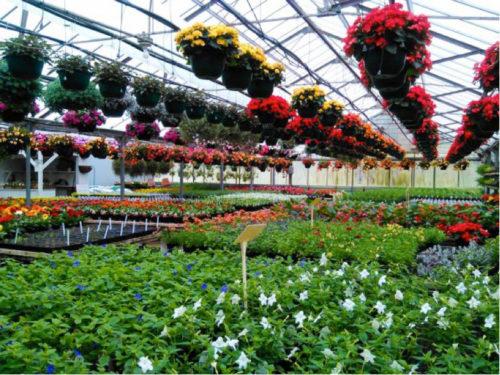 Go Chippewa County Blog
